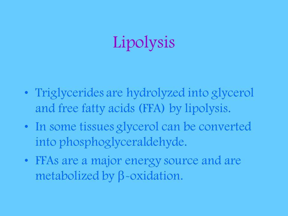 Lipolysis Triglycerides are hydrolyzed into glycerol and free fatty acids (FFA) by lipolysis.