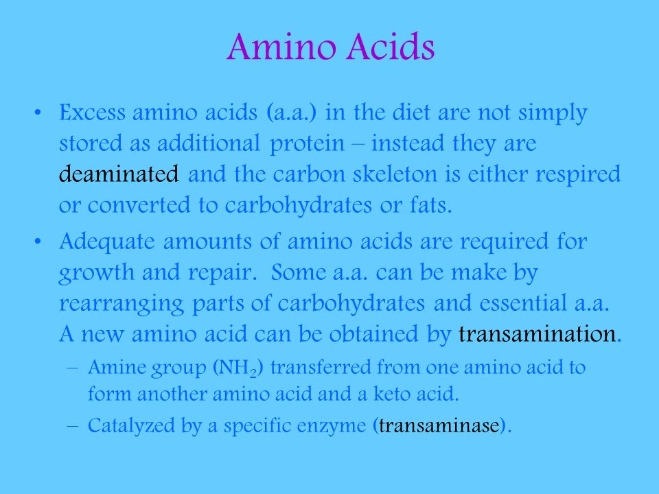 Amino Acids Excess amino acids (a.a.) in the diet are not simply stored as additional protein – instead they are deaminated and the carbon skeleton is either respired or converted to carbohydrates or fats.