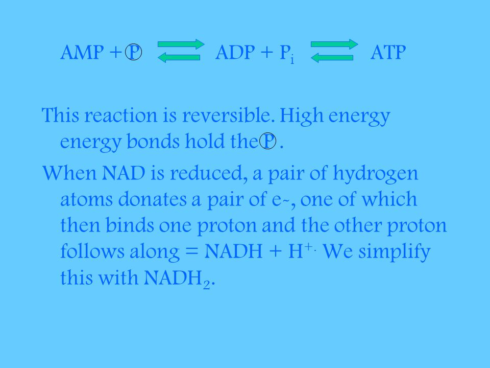 AMP + P ADP + P i ATP This reaction is reversible.