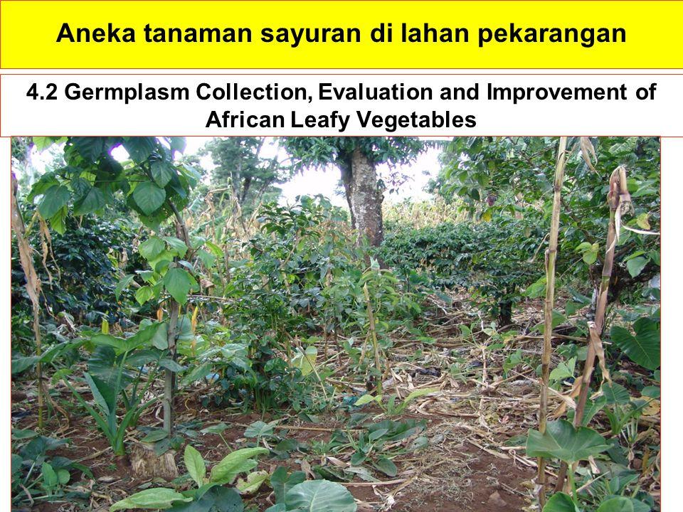 4.2 Germplasm Collection, Evaluation and Improvement of African Leafy Vegetables Aneka tanaman sayuran di lahan pekarangan
