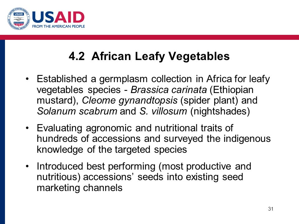 31 4.2 African Leafy Vegetables Established a germplasm collection in Africa for leafy vegetables species - Brassica carinata (Ethiopian mustard), Cleome gynandtopsis (spider plant) and Solanum scabrum and S.