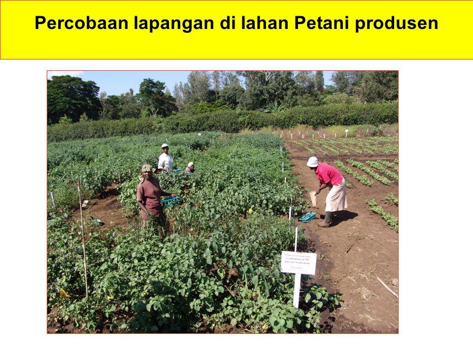 Percobaan lapangan di lahan Petani produsen