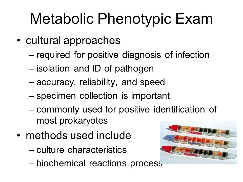 Metabolic Phenotypic Exam cultural approaches –required for positive diagnosis of infection –isolation and ID of pathogen –accuracy, reliability, and speed –specimen collection is important –commonly used for positive identification of most prokaryotes methods used include –culture characteristics –biochemical reactions process