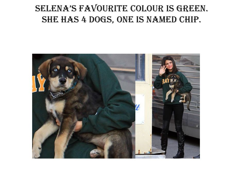 Selena's favourite colour is green. She has 4 dogs, one is named chip.