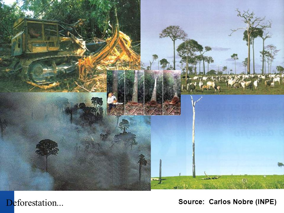 Deforestation... Source: Carlos Nobre (INPE)