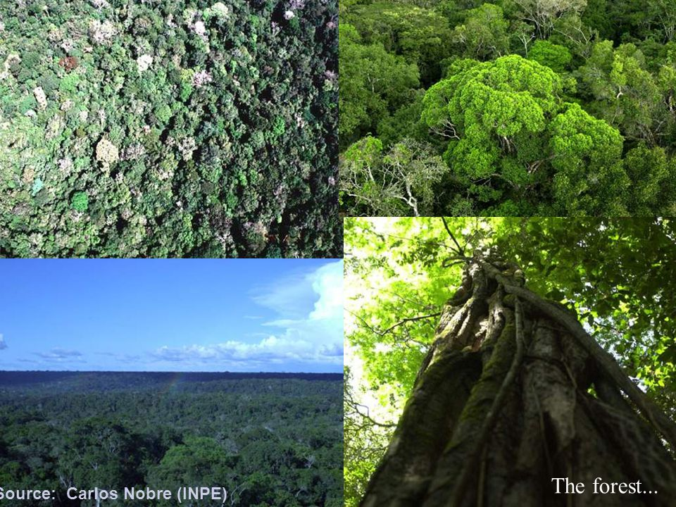 The forest... Source: Carlos Nobre (INPE)