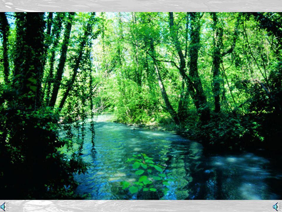 Zona umida (Wetland)