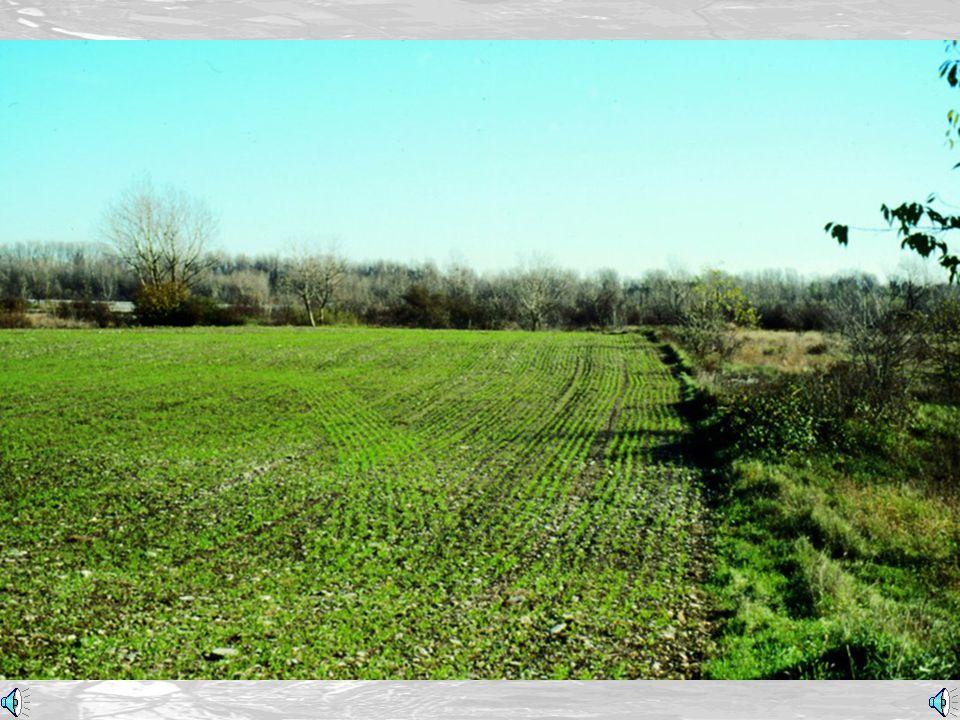Le coltivazioni (Agricultural land)