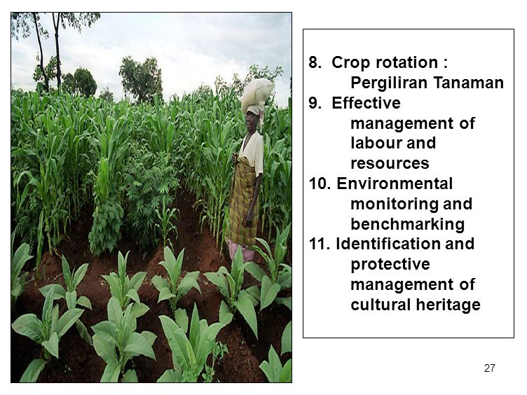 27 8. Crop rotation : Pergiliran Tanaman 9. Effective management of labour and resources 10.