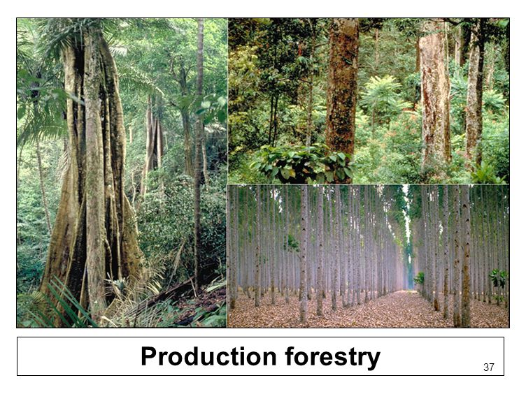 37 Production forestry