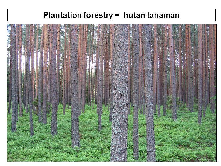 44 Plantation forestry = hutan tanaman