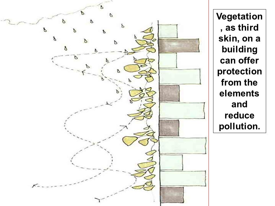Vegetation, as third skin, on a building can offer protection from the elements and reduce pollution.