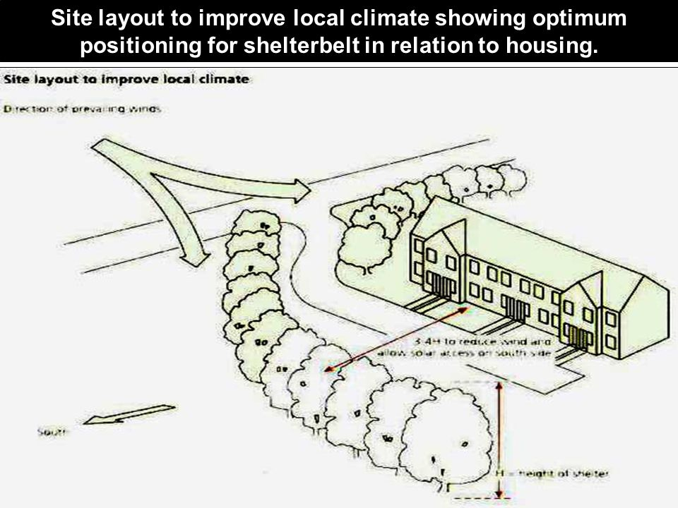 Site layout to improve local climate showing optimum positioning for shelterbelt in relation to housing.