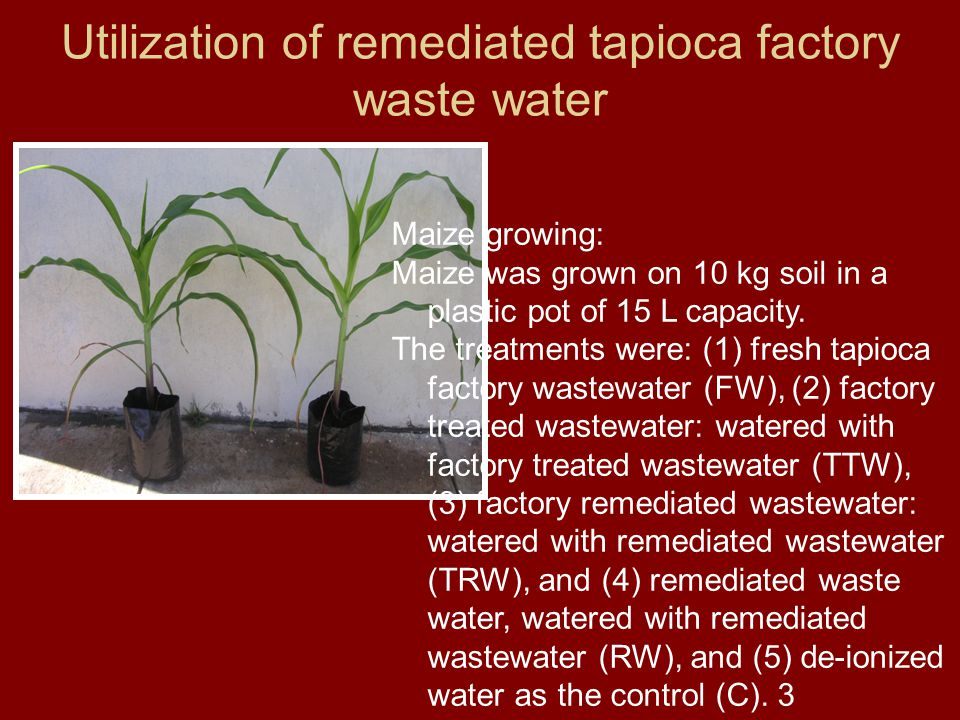 Utilization of remediated tapioca factory waste water Maize growing: Maize was grown on 10 kg soil in a plastic pot of 15 L capacity.