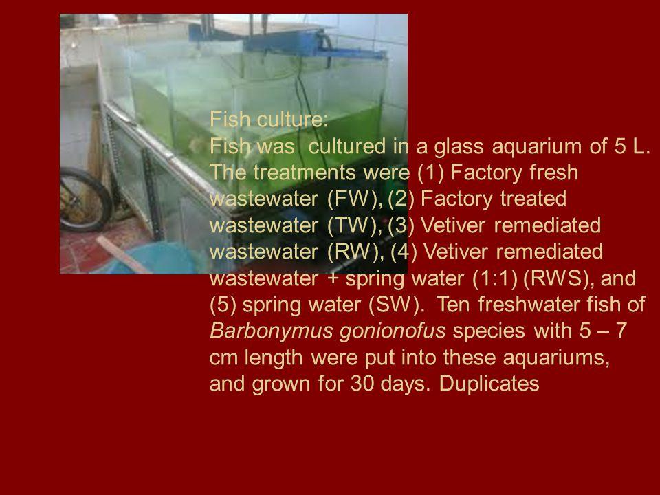 Fish culture: Fish was cultured in a glass aquarium of 5 L.