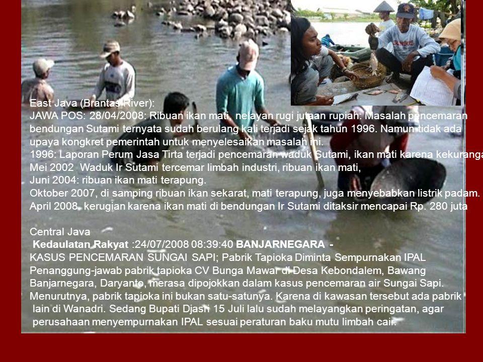 East Java (Brantas River): JAWA POS: 28/04/2008: Ribuan ikan mati, nelayan rugi jutaan rupiah: Masalah pencemaran bendungan Sutami ternyata sudah berulang kali terjadi sejak tahun 1996.