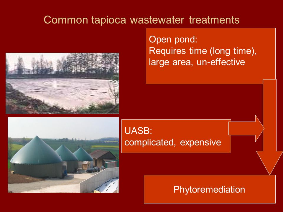 Common tapioca wastewater treatments Open pond: Requires time (long time), large area, un-effective UASB: complicated, expensive Phytoremediation