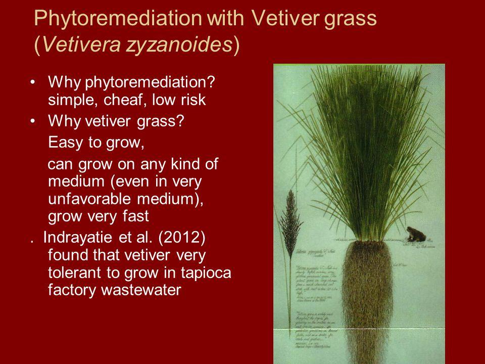 Phytoremediation with Vetiver grass (Vetivera zyzanoides) Why phytoremediation.