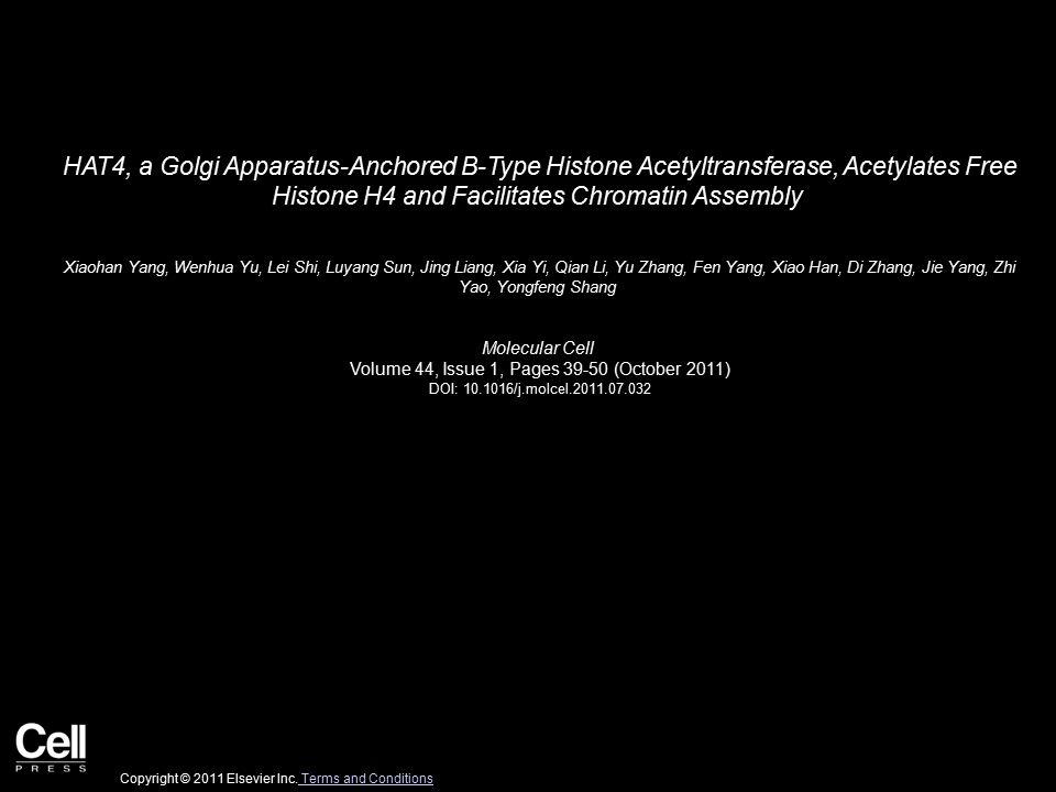HAT4, a Golgi Apparatus-Anchored B-Type Histone Acetyltransferase, Acetylates Free Histone H4 and Facilitates Chromatin Assembly Xiaohan Yang, Wenhua Yu, Lei Shi, Luyang Sun, Jing Liang, Xia Yi, Qian Li, Yu Zhang, Fen Yang, Xiao Han, Di Zhang, Jie Yang, Zhi Yao, Yongfeng Shang Molecular Cell Volume 44, Issue 1, Pages 39-50 (October 2011) DOI: 10.1016/j.molcel.2011.07.032 Copyright © 2011 Elsevier Inc.