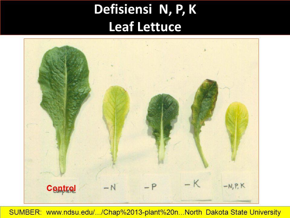 Defisiensi N, P, K Leaf Lettuce Control SUMBER: www.ndsu.edu/.../Chap%2013-plant%20n...North Dakota State University
