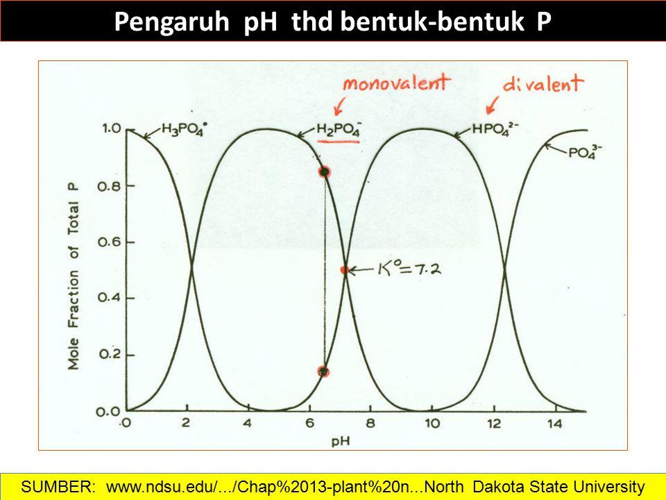 Pengaruh pH thd bentuk-bentuk P SUMBER: www.ndsu.edu/.../Chap%2013-plant%20n...North Dakota State University