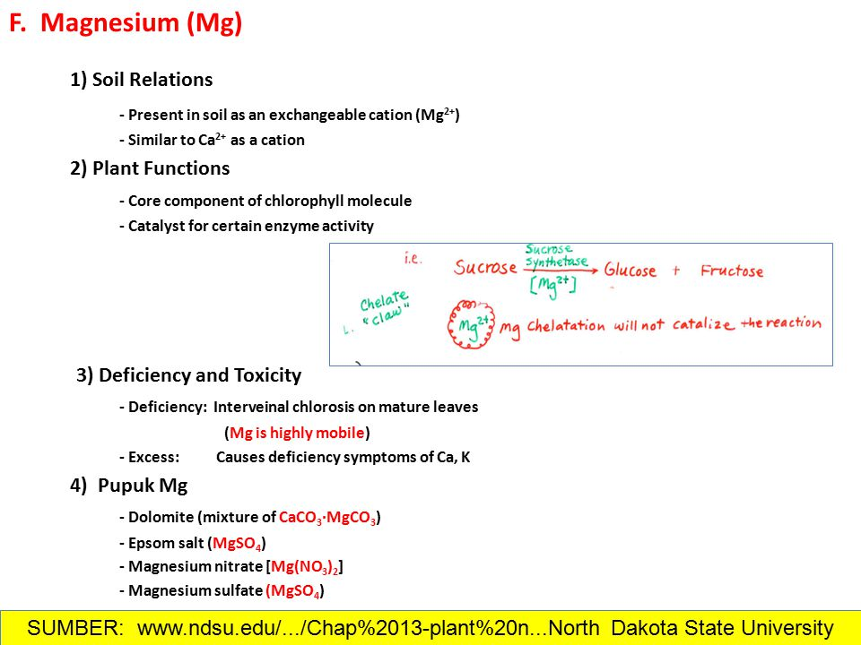F. Magnesium (Mg) 1) Soil Relations - Present in soil as an exchangeable cation (Mg 2+ ) - Similar to Ca 2+ as a cation 2) Plant Functions - Core comp