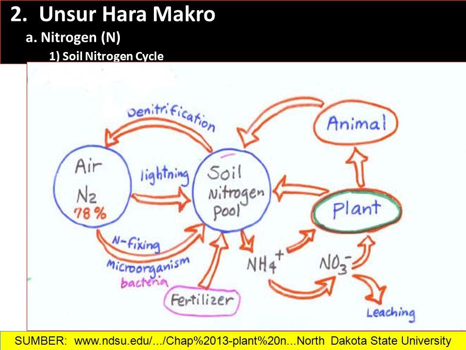 2. Unsur Hara Makro a. Nitrogen (N) 1) Soil Nitrogen Cycle SUMBER: www.ndsu.edu/.../Chap%2013-plant%20n...North Dakota State University