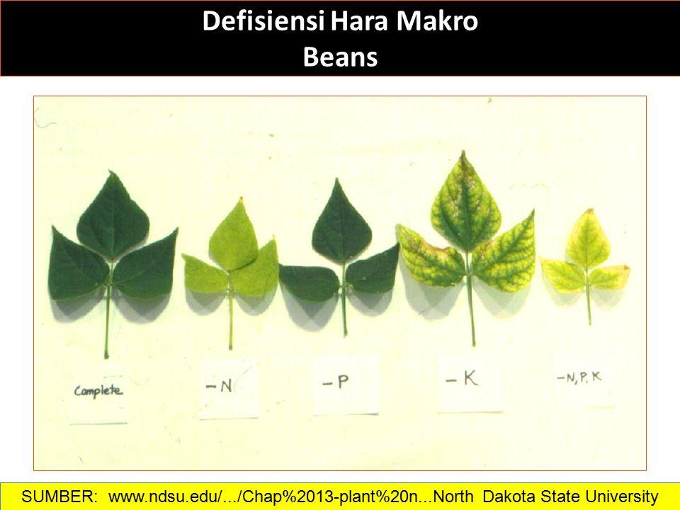 Defisiensi Hara Makro Beans SUMBER: www.ndsu.edu/.../Chap%2013-plant%20n...North Dakota State University