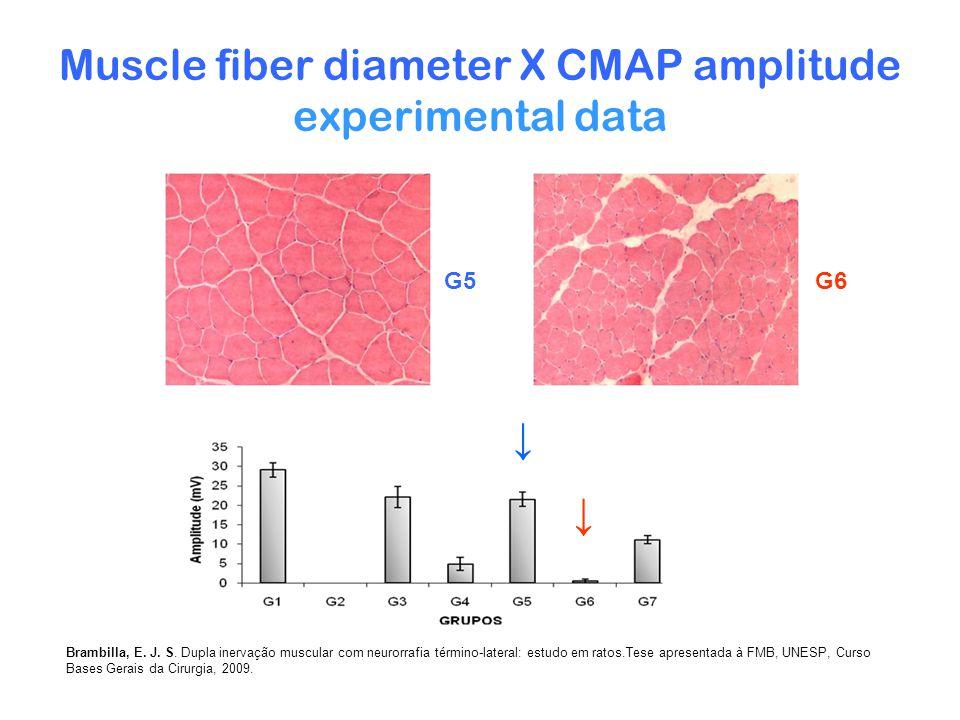 Muscle fiber diameter X CMAP amplitude experimental data G5G6 Brambilla, E.