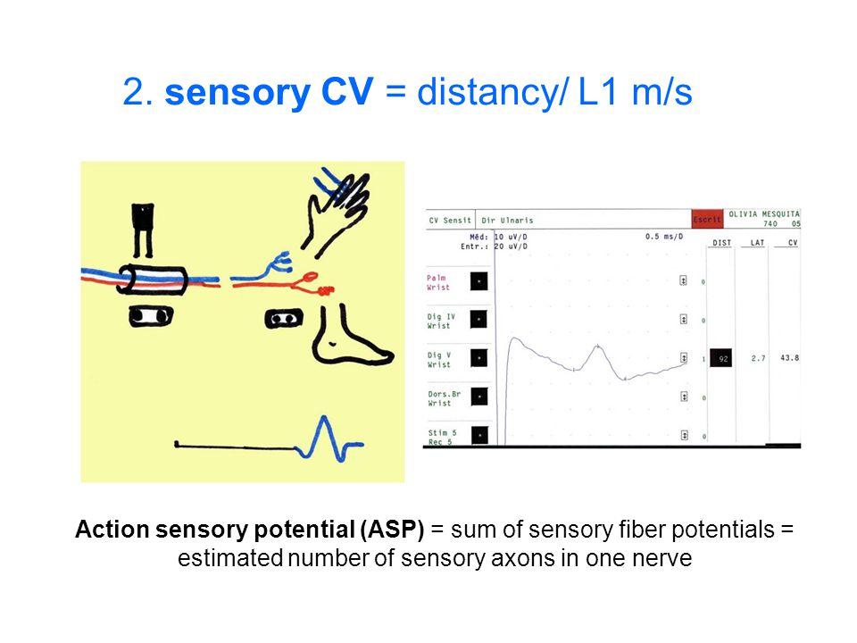2. sensory CV = distancy/ L1 m/s Action sensory potential (ASP) = sum of sensory fiber potentials = estimated number of sensory axons in one nerve