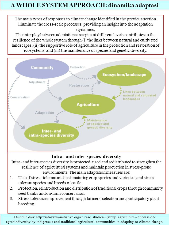A WHOLE SYSTEM APPROACH: dinamika adaptasi Diunduh dari: http://satoyama-initiative.org/en/case_studies-2/group_agriculture-2/the-use-of- agrobiodiversity-by-indigenous-and-traditional-agricultural-communities-in-adapting-to-climate-change/ The main types of responses to climate change identified in the previous section illuminate the cross-scale processes, providing an insight into the adaptation dynamics.