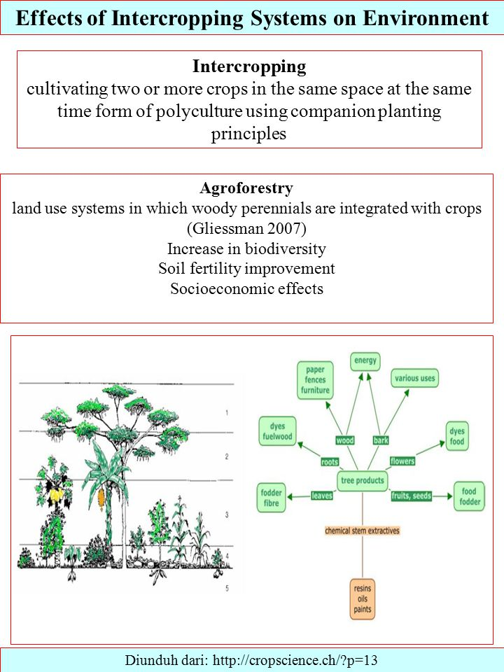 Effects of Intercropping Systems on Environment Diunduh dari: http://cropscience.ch/ p=13 Intercropping cultivating two or more crops in the same space at the same time form of polyculture using companion planting principles Agroforestry land use systems in which woody perennials are integrated with crops (Gliessman 2007) Increase in biodiversity Soil fertility improvement Socioeconomic effects