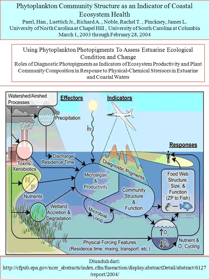 Phytoplankton Community Structure as an Indicator of Coastal Ecosystem Health Paerl, Han, Luettich Jr., Richard A., Noble, Rachel T., Pinckney, James L.