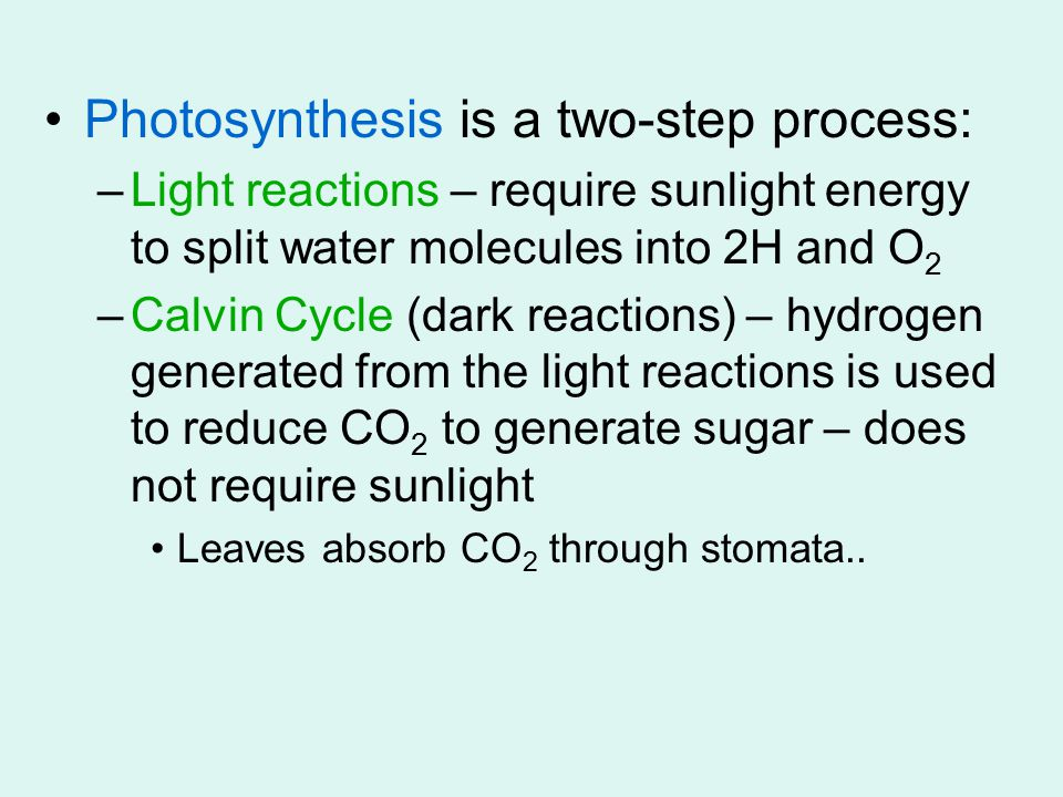 Photosynthesis is a two-step process: –Light reactions – require sunlight energy to split water molecules into 2H and O 2 –Calvin Cycle (dark reactions) – hydrogen generated from the light reactions is used to reduce CO 2 to generate sugar – does not require sunlight Leaves absorb CO 2 through stomata..