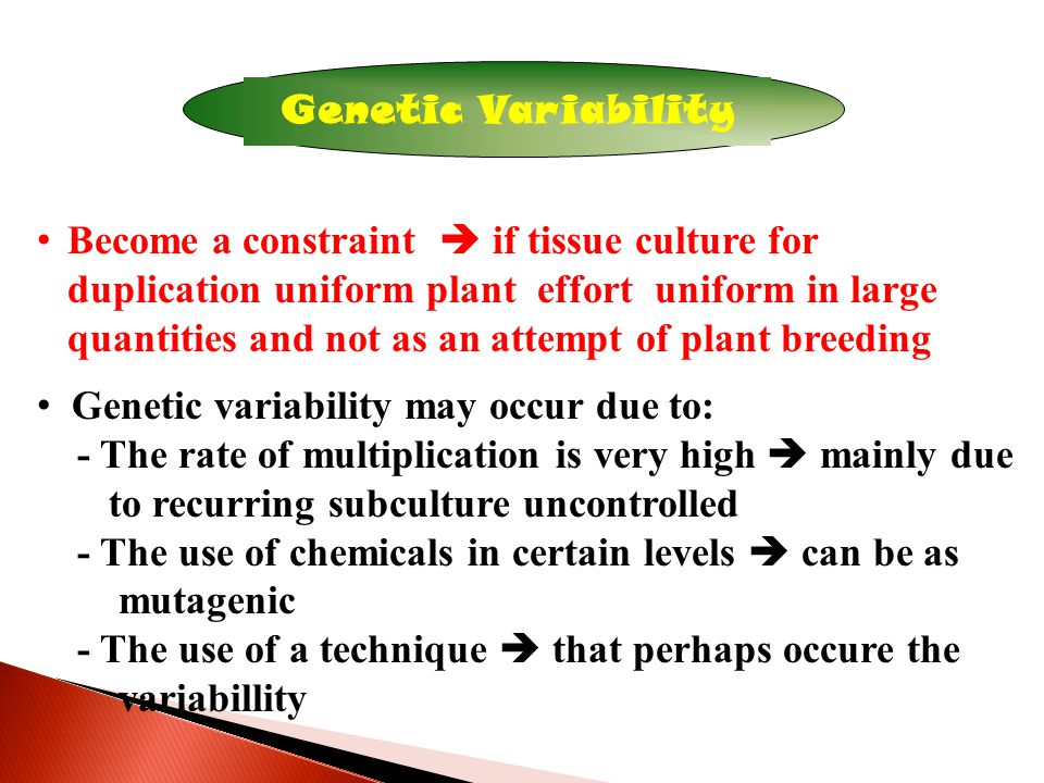 Genetic Variability Become a constraint  if tissue culture for duplication uniform plant effort uniform in large quantities and not as an attempt of plant breeding Genetic variability may occur due to: - The rate of multiplication is very high  mainly due to recurring subculture uncontrolled - The use of chemicals in certain levels  can be as mutagenic - The use of a technique  that perhaps occure the variabillity