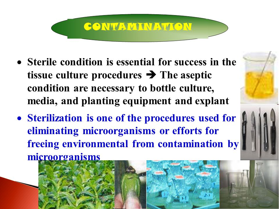4 CONTAMINATION  Sterile condition is essential for success in the tissue culture procedures  The aseptic condition are necessary to bottle culture, media, and planting equipment and explant  Sterilization is one of the procedures used for eliminating microorganisms or efforts for freeing environmental from contamination by microorganisms