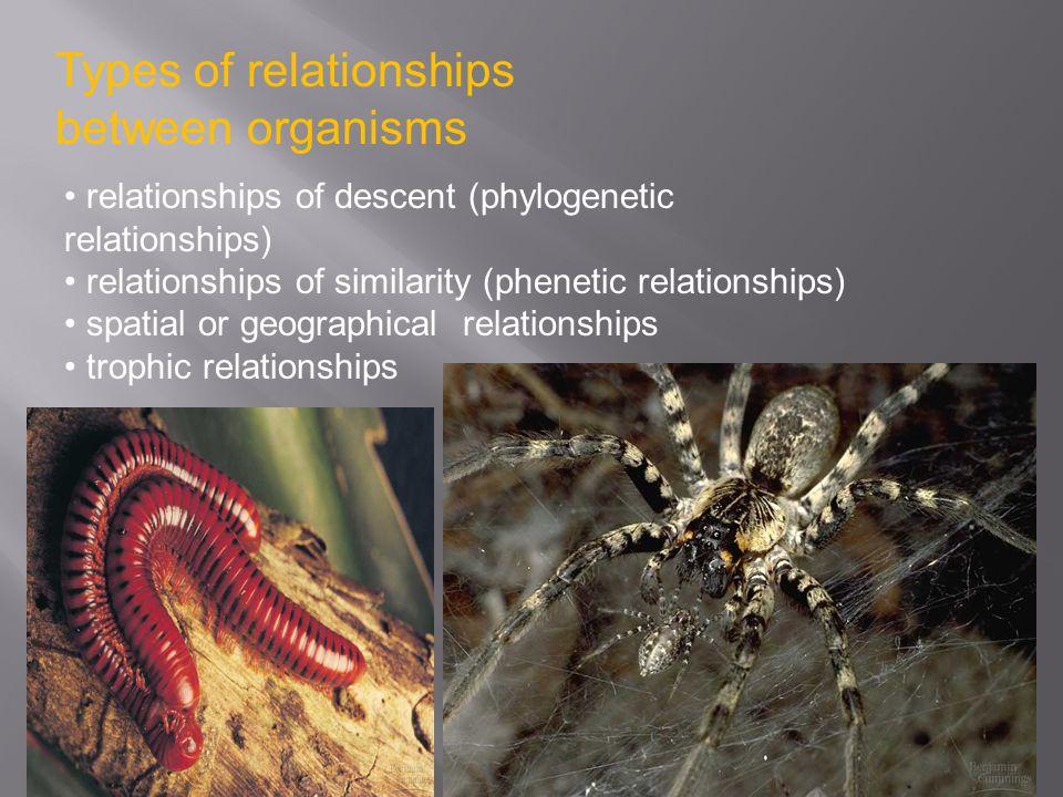 Types of relationships between organisms relationships of descent (phylogenetic relationships) relationships of similarity (phenetic relationships) sp