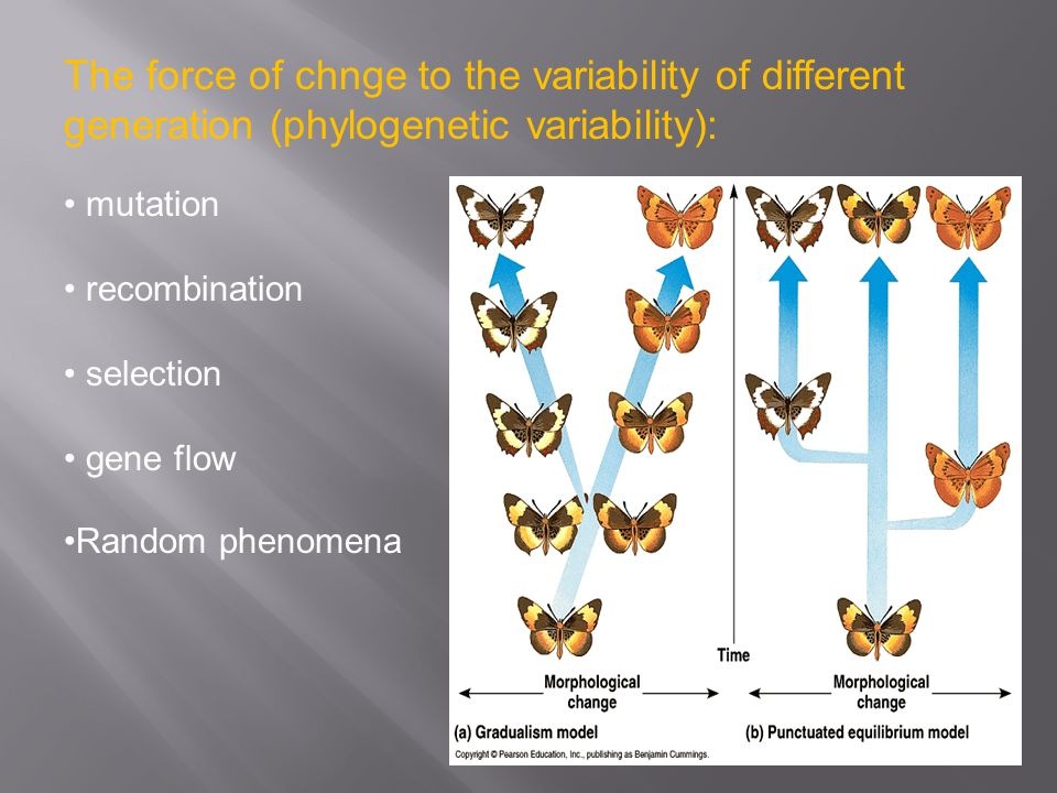 The force of chnge to the variability of different generation (phylogenetic variability): mutation recombination selection gene flow Random phenomena