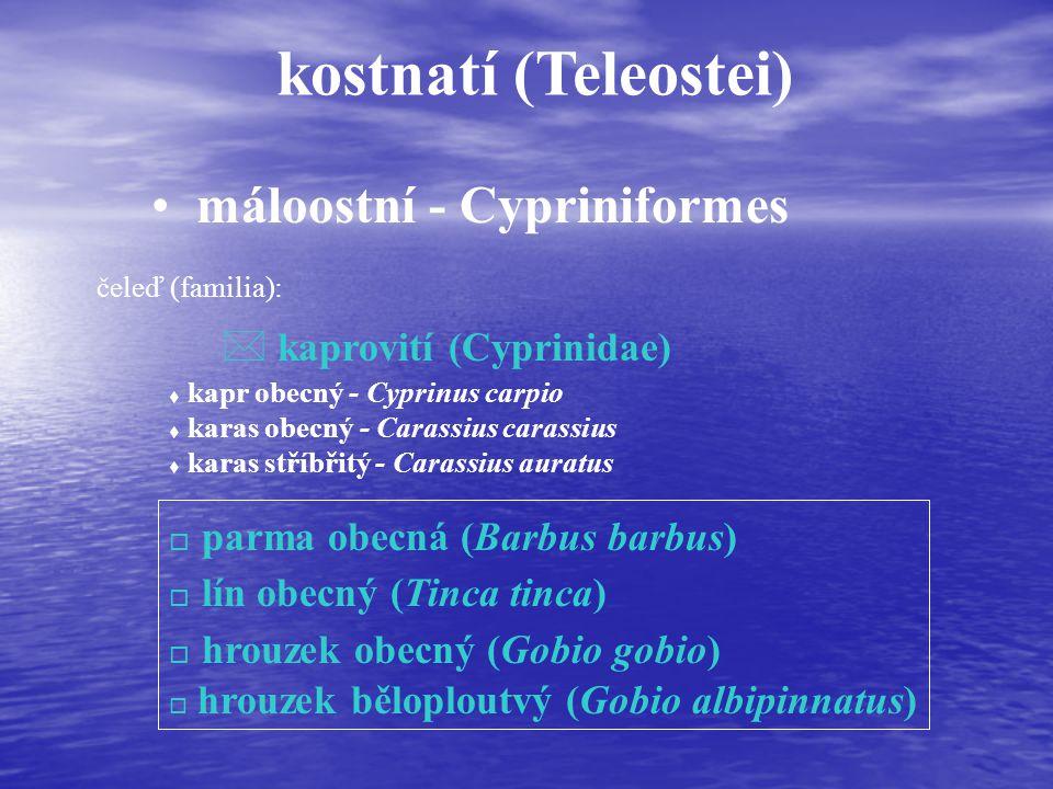 kostnatí (Teleostei) máloostní - Cypriniformes čeleď (familia): * kaprovití (Cyprinidae) t kapr obecný - Cyprinus carpio t karas obecný - Carassius carassius t karas stříbřitý - Carassius auratus o parma obecná (Barbus barbus) o lín obecný (Tinca tinca) o hrouzek obecný (Gobio gobio) o hrouzek běloploutvý (Gobio albipinnatus)