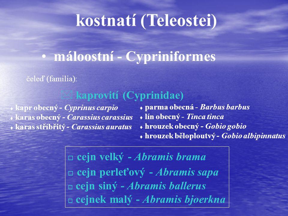 kostnatí (Teleostei) máloostní - Cypriniformes čeleď (familia): * kaprovití (Cyprinidae) t kapr obecný - Cyprinus carpio t karas obecný - Carassius carassius t karas stříbřitý - Carassius auratus t parma obecná - Barbus barbus t lín obecný - Tinca tinca t hrouzek obecný - Gobio gobio t hrouzek běloploutvý - Gobio albipinnatus o cejn velký - Abramis brama o cejn perleťový - Abramis sapa o cejn siný - Abramis ballerus o cejnek malý - Abramis bjoerkna
