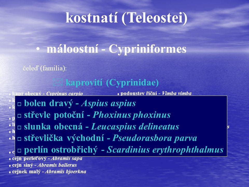 kostnatí (Teleostei) máloostní - Cypriniformes čeleď (familia): * kaprovití (Cyprinidae) t kapr obecný - Cyprinus carpio t karas obecný - Carassius carassius t karas stříbřitý - Carassius auratus t parma obecná - Barbus barbus t lín obecný - Tinca tinca t hrouzek obecný - Gobio gobio t hrouzek běloploutvý - Gobio albipinnatus t cejn velký - Abramis brama t cejn perleťový - Abramis sapa t cejn siný - Abramis ballerus t cejnek malý - Abramis bjoerkna t podoustev říční - Vimba vimba t ostrucha křivočará - Pelecus cultratus t tolstolobik bílý- Hypophthalmichthys molitrix t tolstolobec pestrý - Aristichthys nobilis t ouklej obecná - Alburnus alburnus t ouklejka pruhovaná - Alburnoides bipunctatus o bolen dravý - Aspius aspius o střevle potoční - Phoxinus phoxinus o slunka obecná - Leucaspius delineatus o střevlička východní - Pseudorasbora parva o perlín ostrobřichý - Scardinius erythrophthalmus