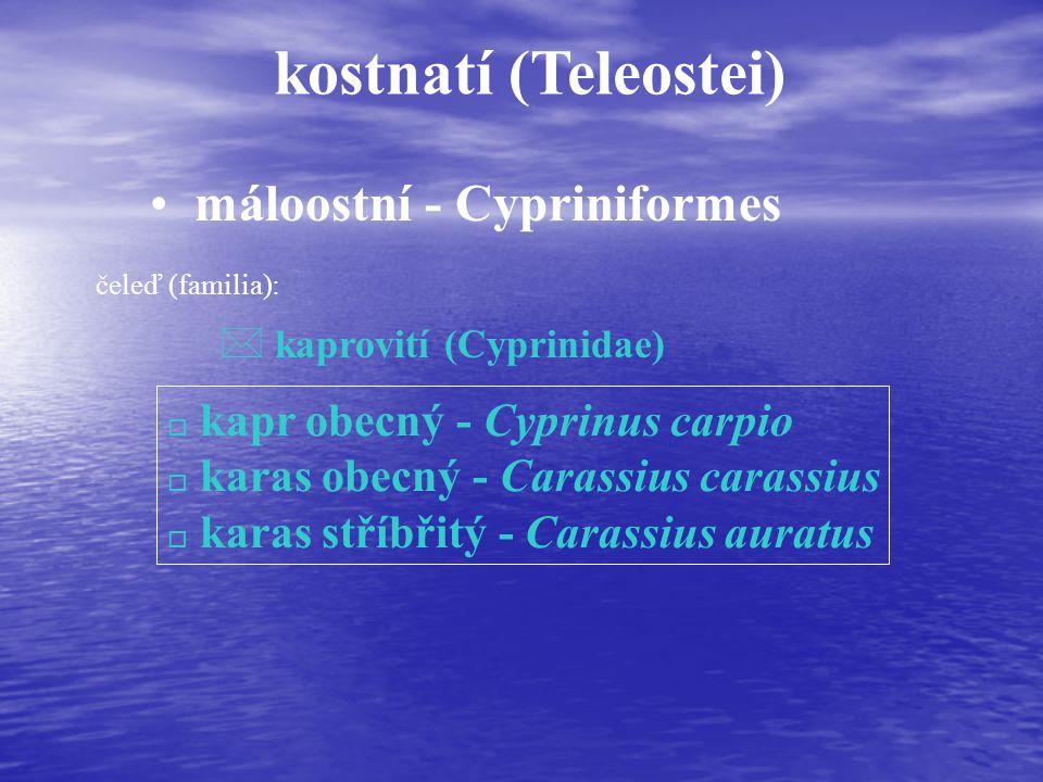 kostnatí (Teleostei) máloostní - Cypriniformes čeleď (familia): * kaprovití (Cyprinidae) o kapr obecný - Cyprinus carpio o karas obecný - Carassius carassius o karas stříbřitý - Carassius auratus