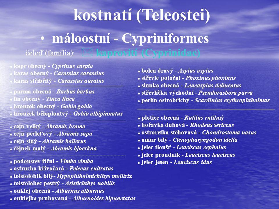 kostnatí (Teleostei) máloostní - Cypriniformes čeleď (familia): * kaprovití (Cyprinidae) t kapr obecný - Cyprinus carpio t karas obecný - Carassius carassius t karas stříbřitý - Carassius auratus t parma obecná - Barbus barbus t lín obecný - Tinca tinca t hrouzek obecný - Gobio gobio t hrouzek běloploutvý - Gobio albipinnatus t cejn velký - Abramis brama t cejn perleťový - Abramis sapa t cejn siný - Abramis ballerus t cejnek malý - Abramis bjoerkna t podoustev říční - Vimba vimba t ostrucha křivočará - Pelecus cultratus t tolstolobik bílý- Hypophthalmichthys molitrix t tolstolobec pestrý - Aristichthys nobilis t ouklej obecná - Alburnus alburnus t ouklejka pruhovaná - Alburnoides bipunctatus t bolen dravý - Aspius aspius t střevle potoční - Phoxinus phoxinus t slunka obecná - Leucaspius delineatus t střevlička východní - Pseudorasbora parva t perlín ostrobřichý - Scardinius erythrophthalmus t plotice obecná - Rutilus rutilus) t hořavka duhová - Rhodeus sericeus t ostroretka stěhovavá - Chondrostoma nasus t amur bílý - Ctenopharyngodon idella t jelec tloušť - Leuciscus cephalus t jelec proudník - Leuciscus leuciscus t jelec jesen - Leuciscus idus