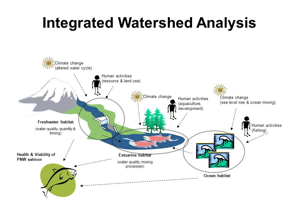 Human activities (fishing) Freshwater habitat (water quality, quantity & timing) Estuarine habitat (water quality, mixing processes) Ocean habitat Climate change (altered water cycle) Human activities (resource & land use) Human activities (aquaculture, development) Climate change (sea level rise & ocean mixing) Health & Viability of PNW salmon Integrated Watershed Analysis Climate change