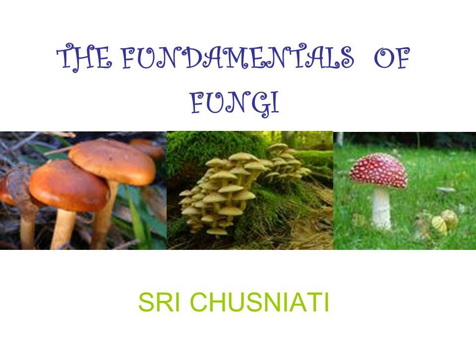 THE FUNDAMENTALS OF FUNGI SRI CHUSNIATI
