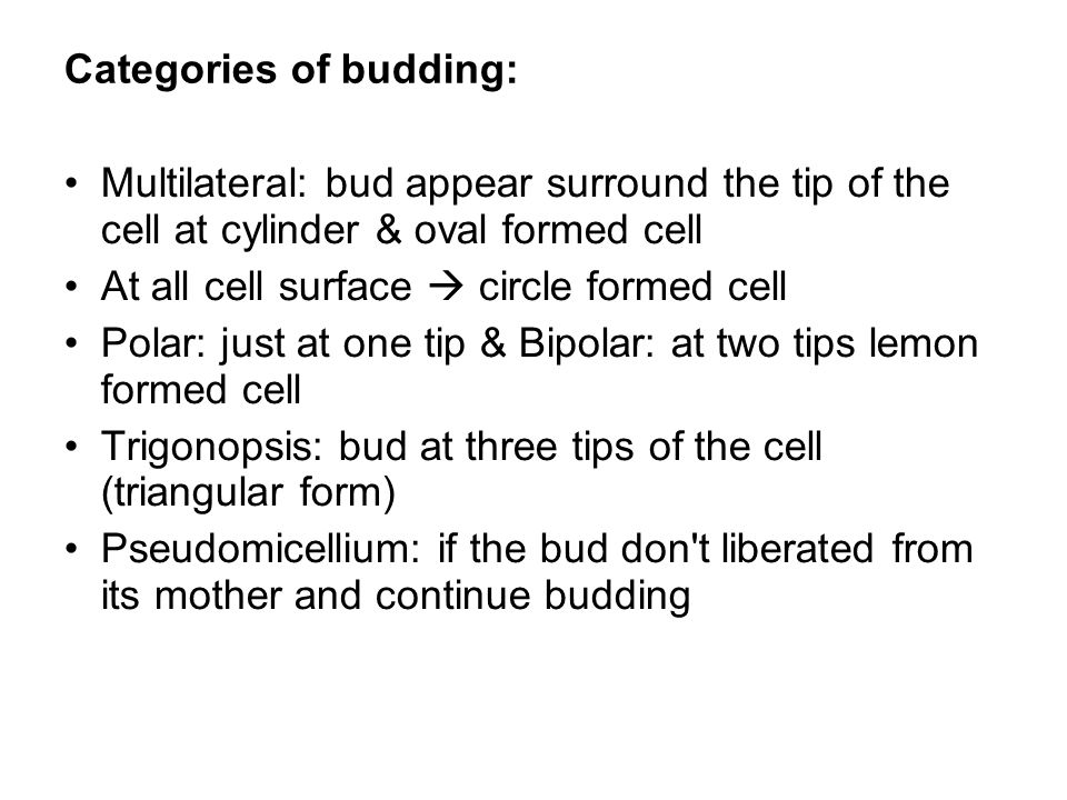 Categories of budding: Multilateral: bud appear surround the tip of the cell at cylinder & oval formed cell At all cell surface  circle formed cell P
