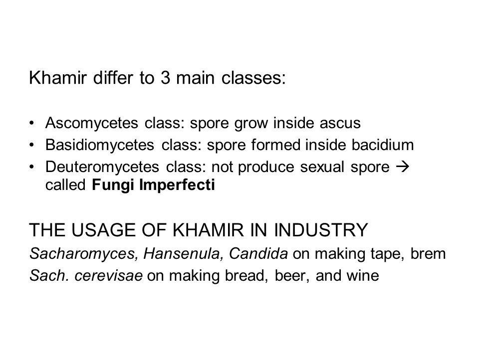 Khamir differ to 3 main classes: Ascomycetes class: spore grow inside ascus Basidiomycetes class: spore formed inside bacidium Deuteromycetes class: n