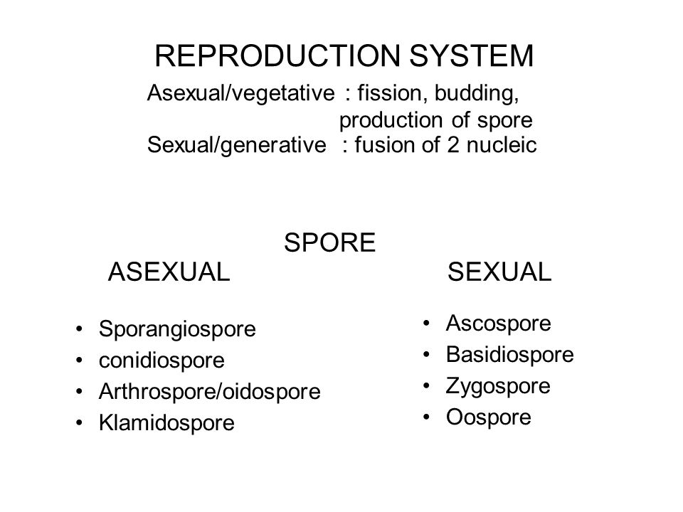 SPORE ASEXUAL SEXUAL Sporangiospore conidiospore Arthrospore/oidospore Klamidospore Ascospore Basidiospore Zygospore Oospore REPRODUCTION SYSTEM Asexu