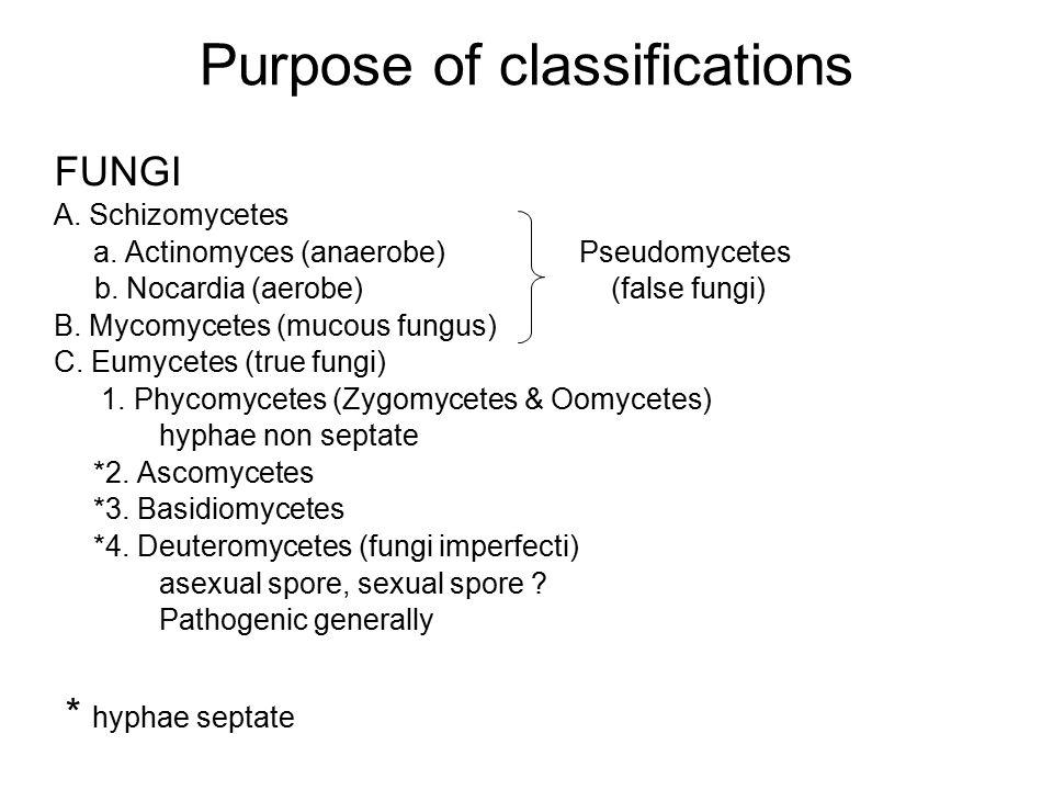 Purpose of classifications FUNGI A. Schizomycetes a. Actinomyces (anaerobe) Pseudomycetes b. Nocardia (aerobe) (false fungi) B. Mycomycetes (mucous fu