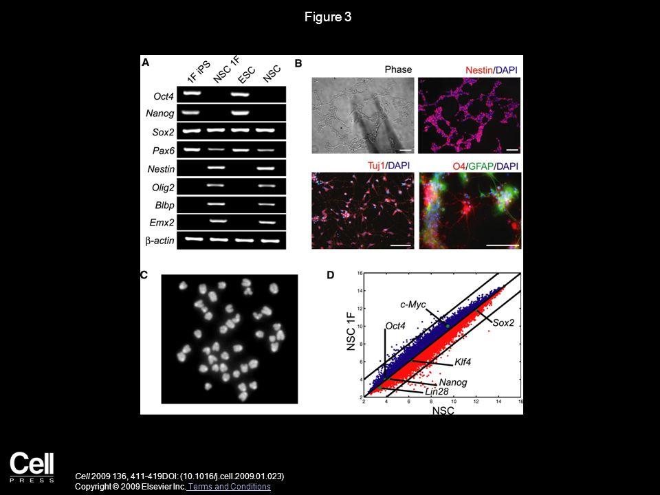Figure 3 Cell 2009 136, 411-419DOI: (10.1016/j.cell.2009.01.023) Copyright © 2009 Elsevier Inc. Terms and Conditions Terms and Conditions